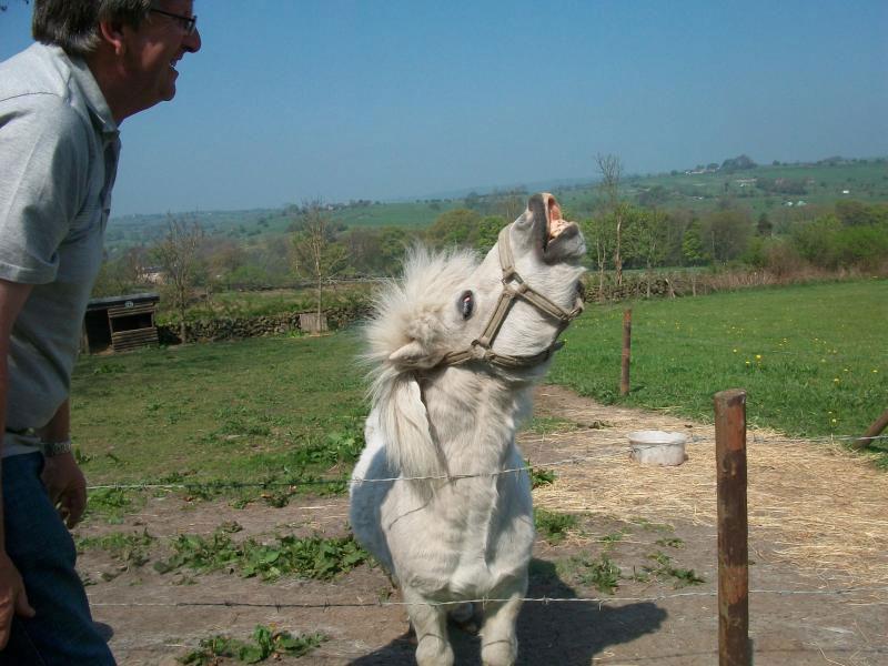 Elliott the Pony
